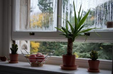 6 Tips for Healthy Indoor Air