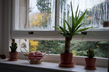 Open Window | The Healthier Home